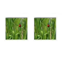 Ladybird Cufflinks (Square)