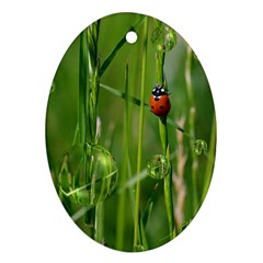 Ladybird Oval Ornament (Two Sides)
