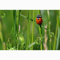 Ladybird Canvas 12  X 18  (unframed)