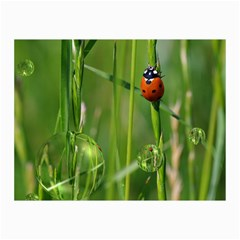 Ladybird Canvas 20  x 30  (Unframed)