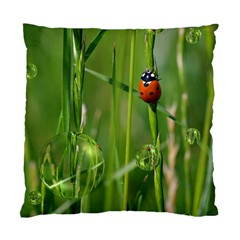 Ladybird Cushion Case (two Sided)