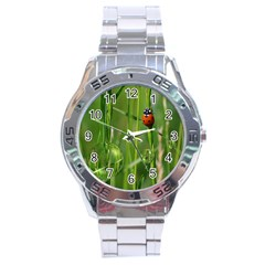 Ladybird Stainless Steel Watch (Men s)