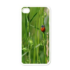 Ladybird Apple iPhone 4 Case (White)