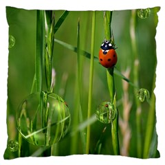 Ladybird Large Cushion Case (Single Sided)