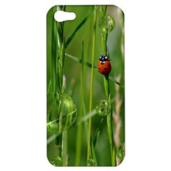 Ladybird Apple Iphone 5 Hardshell Case