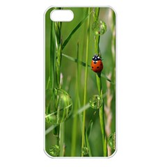 Ladybird Apple iPhone 5 Seamless Case (White)