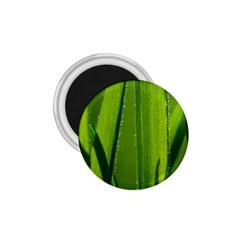 Grass 1.75  Button Magnet