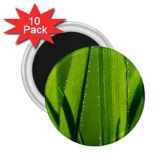 Grass 2 25  Button Magnet (10 Pack)