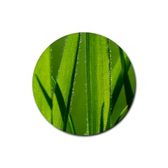 Grass Drink Coasters 4 Pack (Round)
