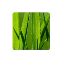 Grass Magnet (Square)