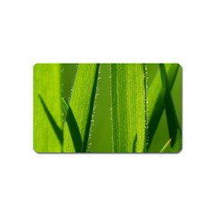 Grass Magnet (Name Card)