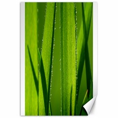 Grass Canvas 20  X 30  (unframed)