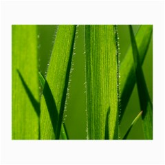 Grass Glasses Cloth (Small, Two Sided)