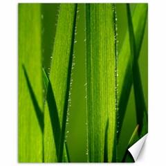 Grass Canvas 11  X 14  (unframed)