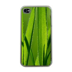 Grass Apple iPhone 4 Case (Clear)