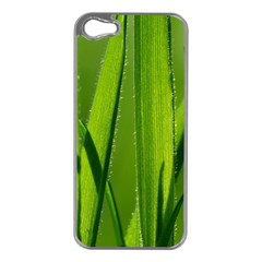 Grass Apple Iphone 5 Case (silver)