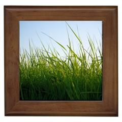 Grass Framed Ceramic Tile