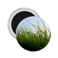 Grass 2.25  Button Magnet