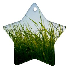 Grass Star Ornament (Two Sides)