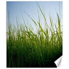 Grass Canvas 8  x 10  (Unframed)