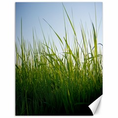 Grass Canvas 12  x 16  (Unframed)