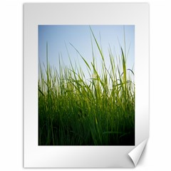 Grass Canvas 36  x 48  (Unframed)