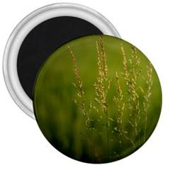 Grass 3  Button Magnet