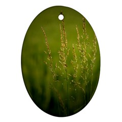 Grass Oval Ornament