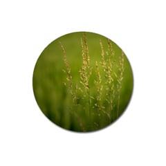 Grass Magnet 3  (round)