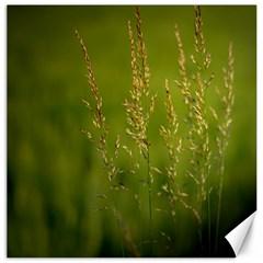 Grass Canvas 16  x 16  (Unframed)