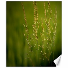 Grass Canvas 20  x 24  (Unframed)