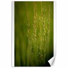 Grass Canvas 20  x 30  (Unframed)