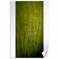 Grass Canvas 24  x 36  (Unframed)