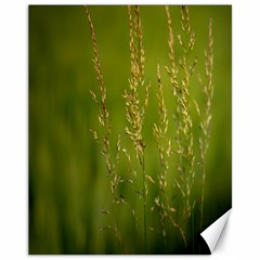 Grass Canvas 11  x 14  (Unframed)