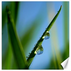 Waterdrops Canvas 16  X 16  (unframed)