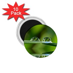 Waterdrops 1.75  Button Magnet (10 pack)