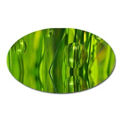 Green Bubbles  Magnet (Oval)
