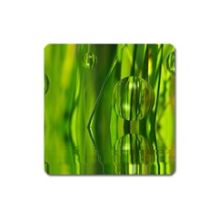 Green Bubbles  Magnet (Square)