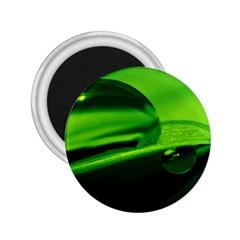 Green Drop 2 25  Button Magnet