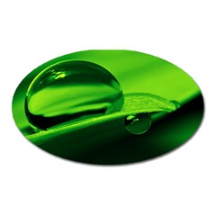 Green Drop Magnet (oval)