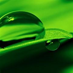 Green Drop Canvas 20  X 20  (unframed)