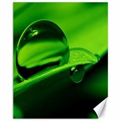 Green Drop Canvas 11  X 14  (unframed)