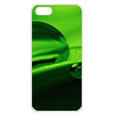 Green Drop Apple iPhone 5 Seamless Case (White)