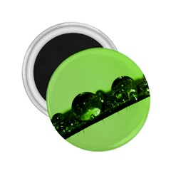 Green Drops 2.25  Button Magnet