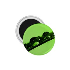 Green Drops 1.75  Button Magnet