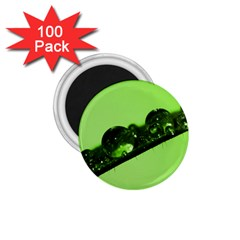 Green Drops 1 75  Button Magnet (100 Pack)