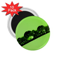 Green Drops 2.25  Button Magnet (10 pack)