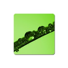 Green Drops Magnet (Square)