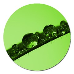 Green Drops Magnet 5  (round)