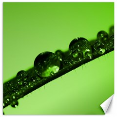 Green Drops Canvas 12  X 12  (unframed)